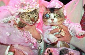 Cat-Wedding1