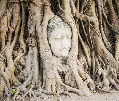 Buddha-head-overgrown-by-fig-t-97968824-1